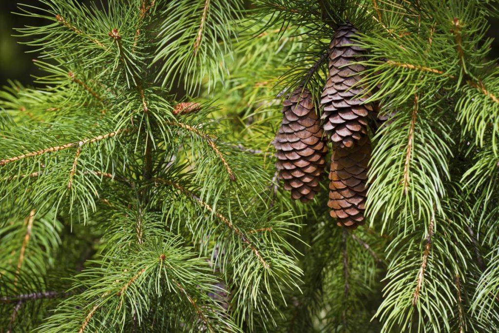 Healing Cedar: The Ultimate Sauna Experience