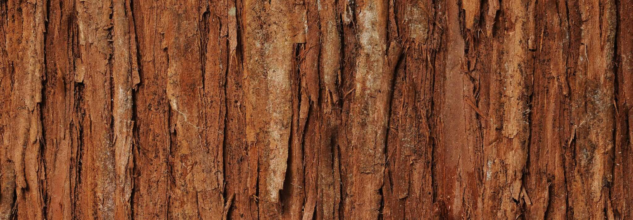 Benefits of Cedarwood
